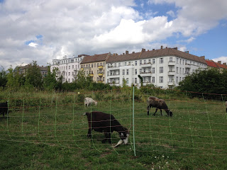 berlingoats